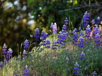 April Showers, Wildflowers and Tasty Treats