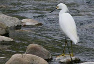 Ventura Audubon Society